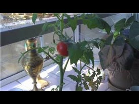 Indoor Gardening Tips How To Make House Plant Leaves Shiny Youtube