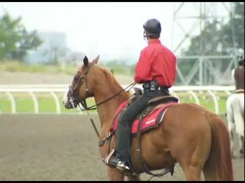 A day in the life of Woodbine's head outrider Robert Love
