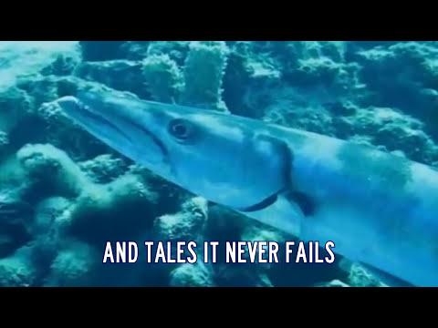 Barracuda - Heart (with lyrics) Deep Sea Video