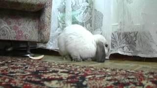 Уход за кроликом . Все О Домашних Животных