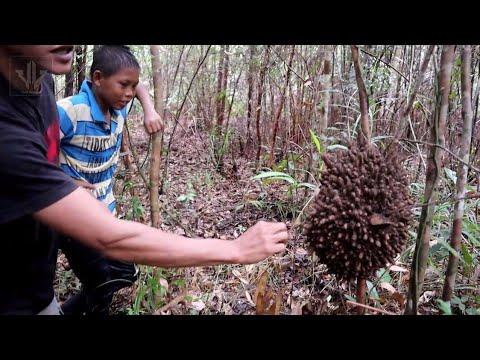 Menghindari C0R0NA Isolasi Diri Di Hutan Kalimantan
