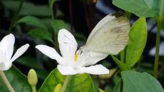 Loving the sight of a beautiful butterfly...