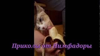 Кошки приколы!Кот Джастин ест банан.Приколы от Нимфадоры. Супер смешное видео.Просто ржач.