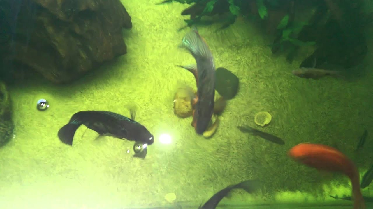 Top view of fish tank youtube for Fishing tank top