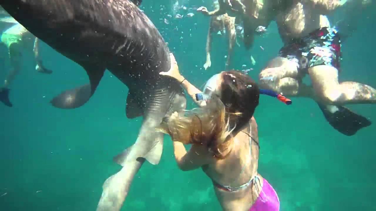 Nurse Shark Tagging and Swim - YouTube on