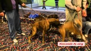 Видео новости-N: Выставка собак в Николаеве 3 октября