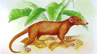 historia ssaków ewolucja