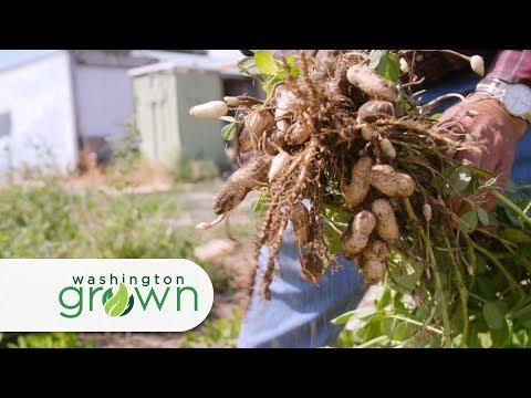 """Washington Grown Season 5 Episode 4 """"Who Knew?"""" with Cooking Segment"""
