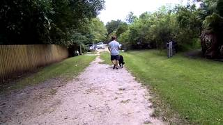 Axel 7 Year German Shepherd Dog Aggressive