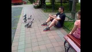 Catching pigeons in the park