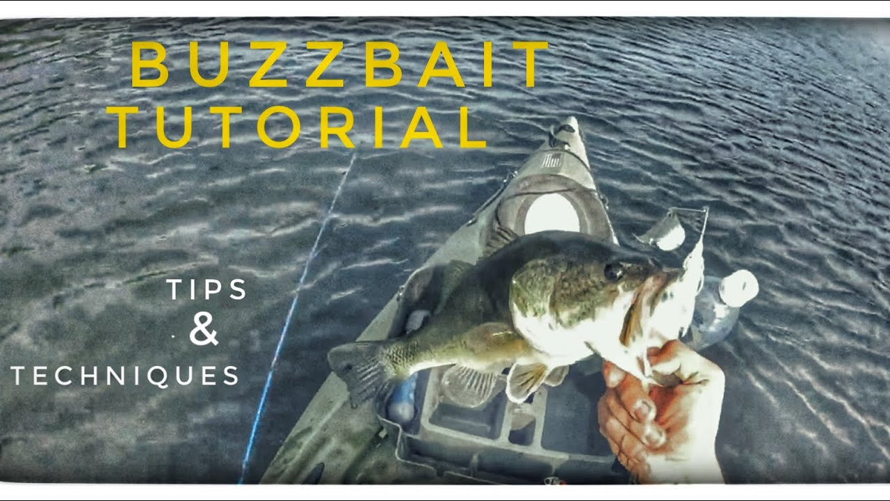 Top water bass fishing buzzbait blow ups youtube for Top water bass fishing
