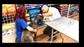 Young Vet reaction to a pitbull 😱😱