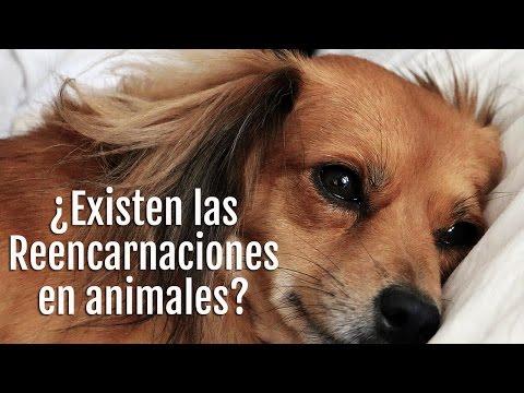 ¿Existe la reencarnación en animales?