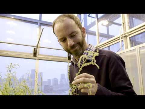 Meet U of T evolutionary biologist Stephen Wright