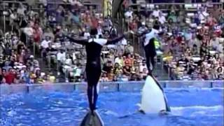Why captivity for whales and dolphins is wrong.