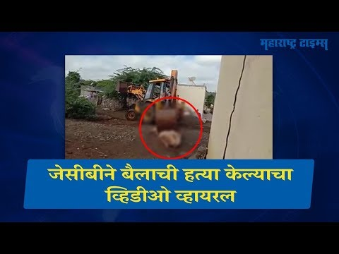 Bull Killed By Using JCB In Indapur Pune Video Viral