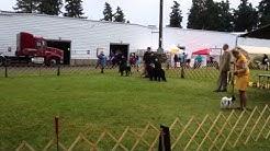 Clackamas Kennel Club Dog Show 2013