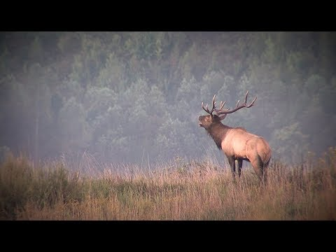 Kentucky Elk Management Plan