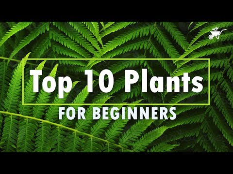 Top 10 Easy to Care Plants for Beginners   Low Maintenance House Plants