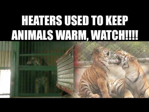 Kanpur Zoo use heaters to keep animals warm in cold weather, Watch | Oneindia News