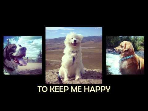 Keep Me Company Pet Sitting HD