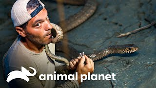 La desgarradora mordida de una serpiente rata | Wild Frank en India | Animal Planet