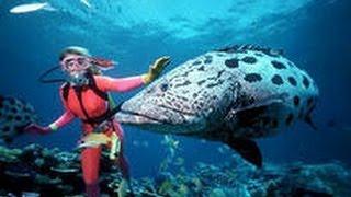 Подводная охота . АВСТРАЛИЯ SPEARFISHING(Австралия является единственной страной в мире, которая занимает территорию целого материка, а также множе..., 2014-07-27T14:39:18.000Z)