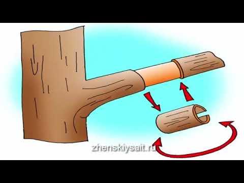 Что делать, если деревья не плодоносят