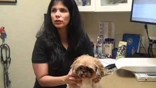 Katie Sue The Seizuring Dog