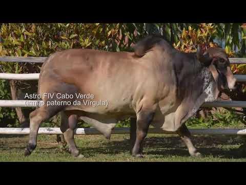LOTE 24 – FAUSTA FIV CABO VERDE JCVL3407