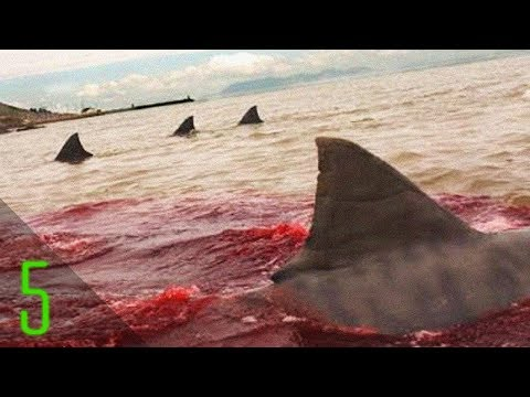 5 Unbelievable Shark Attacks That Actually Happened