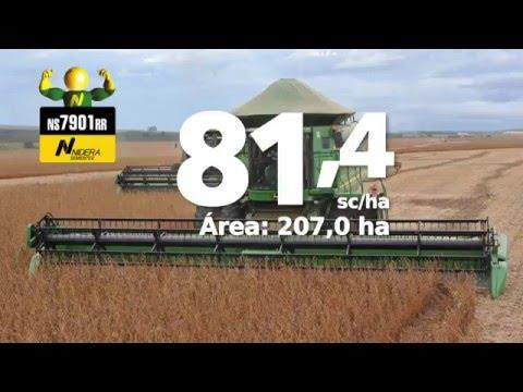 NIDERA - Veja os campeões de produtividade de soja !