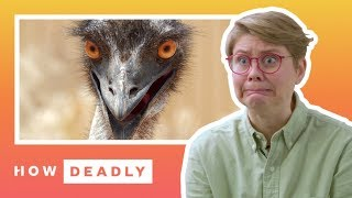 How dangerous are emus, really? | REACTION