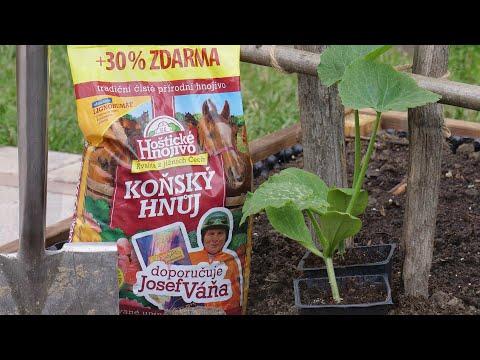 Pěstujme okurky a cukety!