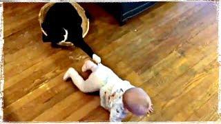 Приколы с Животными и Детьми   Fun with Children and Animals #375