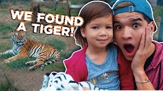 WE FOUND A TIGER!