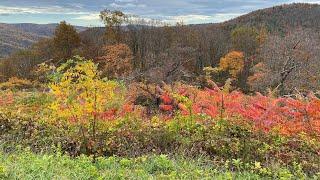 Fall Colors on the Skyline Drive - Shenandoah National Park - October 2020