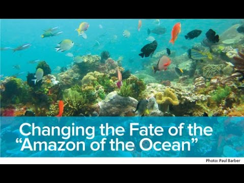 "Changing the Fate of the ""Amazon of the Ocean"""