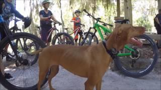 Vizsla Trail Dog Maggie & Alex at Carter Loyce Harpe Park May 7 2017