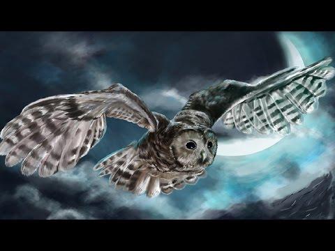 Native American Sleep Music - Great Owl Woods