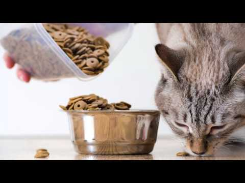 Best Cat Food Brands + Verified Reviews | ConsumerAffairs