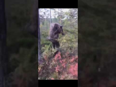 Bar skutt elg ned fra fjellet