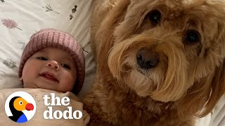 Dog Teaches His Baby Sister How To Crawl | The Dodo Soulmates