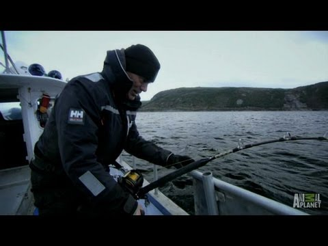 Legend of Loch Ness - How to Catch a Greenland Shark   River Monsters