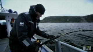 Legend of Loch Ness - How to Catch a Greenland Shark | River Monsters