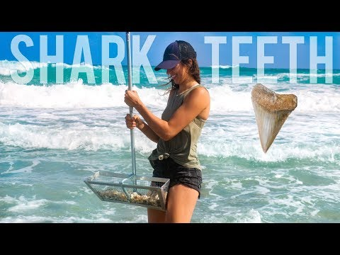 THIS is how I found a shark tooth! | Florida Adventures EP 5