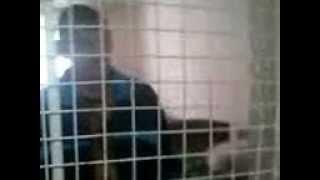 Инвалидов содержут вкарцере!!!(в Токаревском интернате для инвалидов администрация интерната садержит ребят вкарцере потому что те оста..., 2012-07-29T09:45:16.000Z)