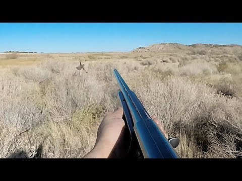 Quail Hunt ► This Is The End