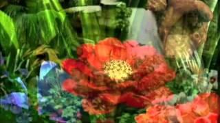 Keiko Matsui Flowers Of The Sea