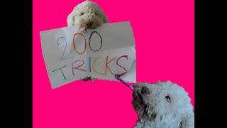 200 DOG TRICKS
